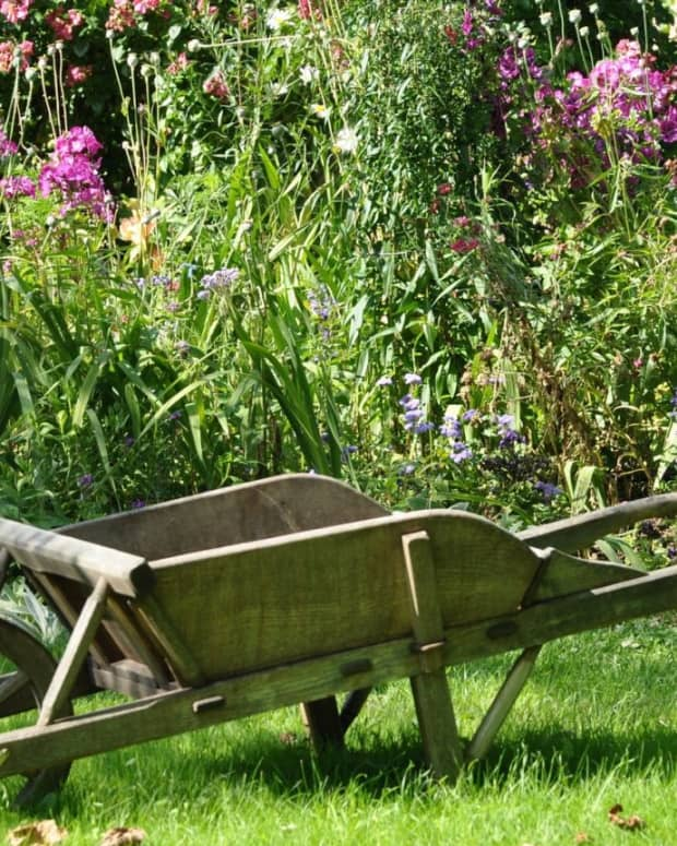 how-to-have-a-greener-garden-next-year