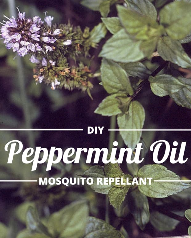my-favorite-mosquito-repellent-peppermint
