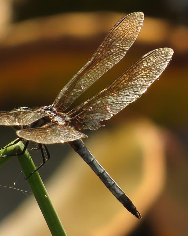 enchanting-fairies