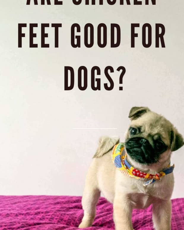 chicken-feet-for-dogs