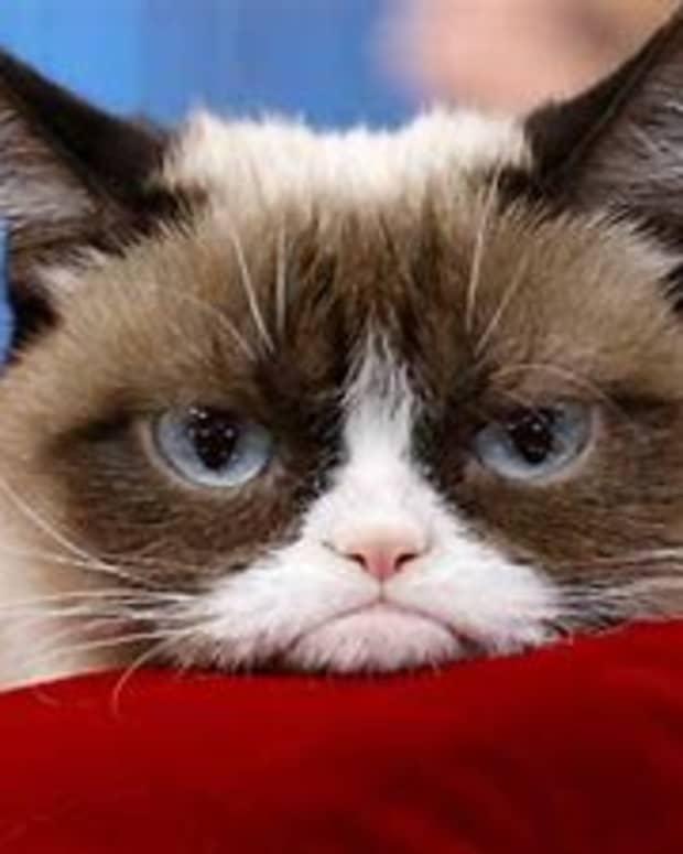 international-internet-sensation-grumpy-cat