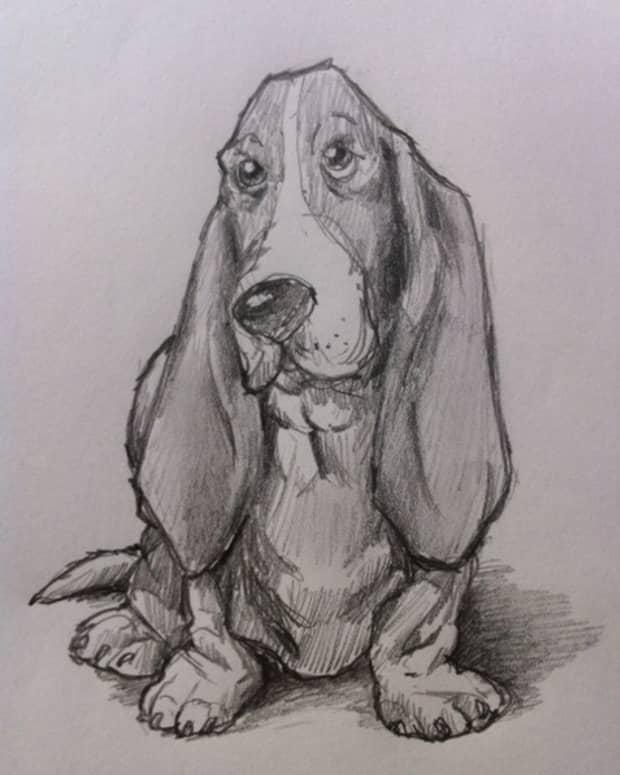 how-to-draw-a-basset-hound-dog