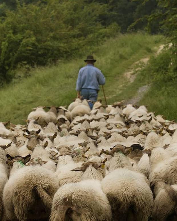 the-shepherd-2