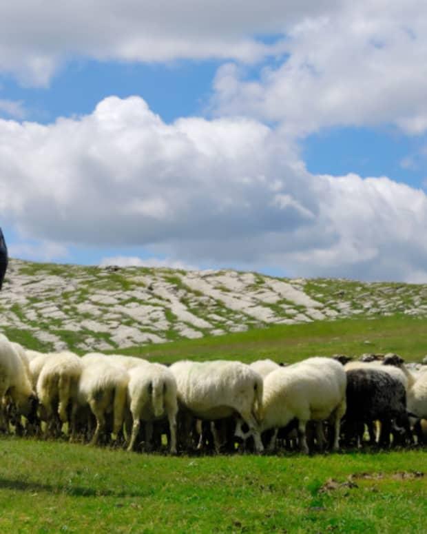 the-shepherd-3