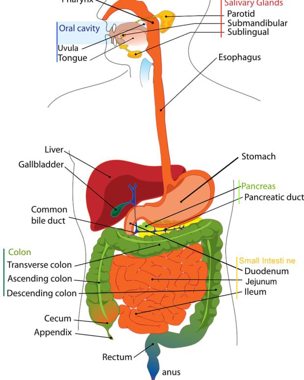 gastroesophageal-reflux-disease-gerd-facts