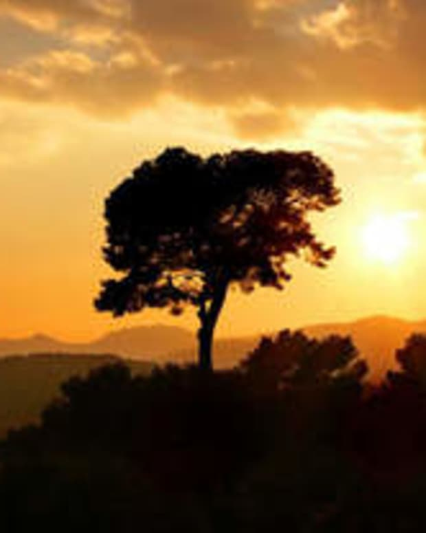 a-diary-entry-the-tree