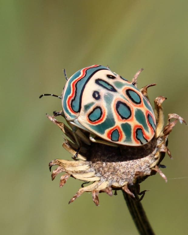 most-stunning-beautiful-insects
