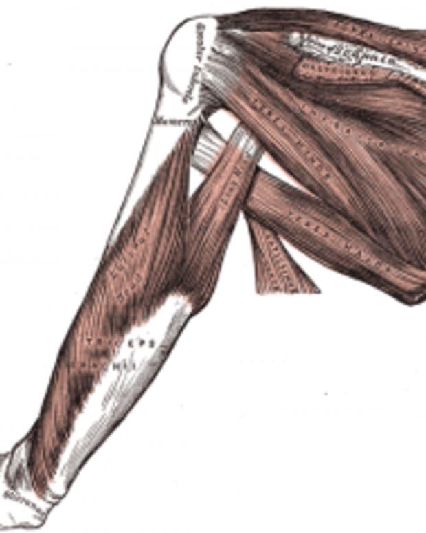 human-anatomy-lesson-21