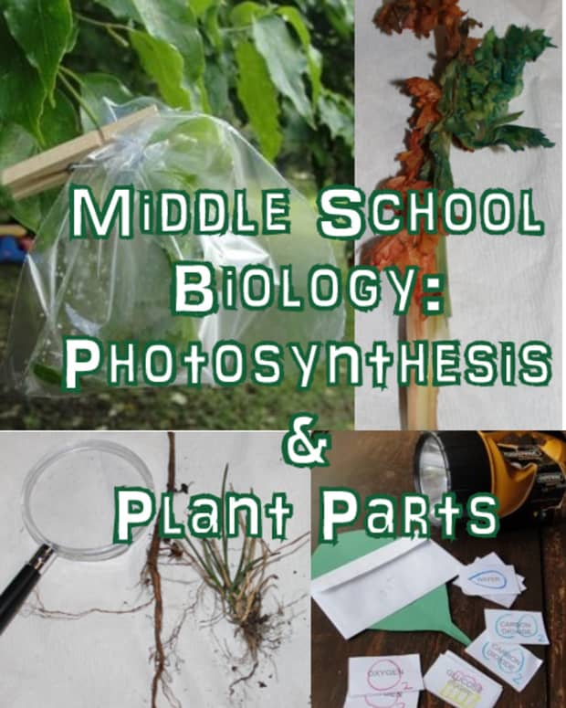 photosynthesis-and-plant-parts-lesson