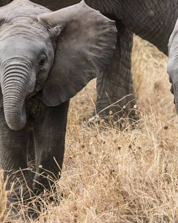 the-best-elephant-gifts