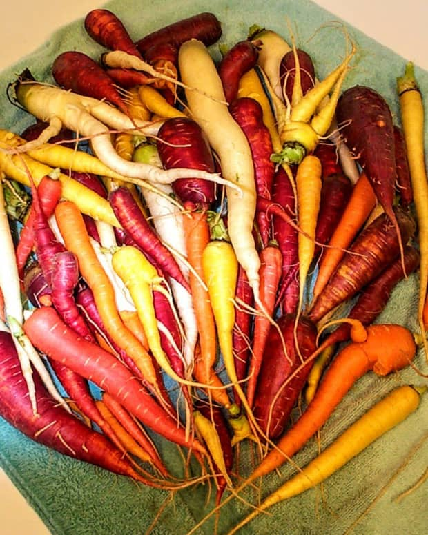 colorful-carrots---freezing-your-crop-to-make-the-most-of-them