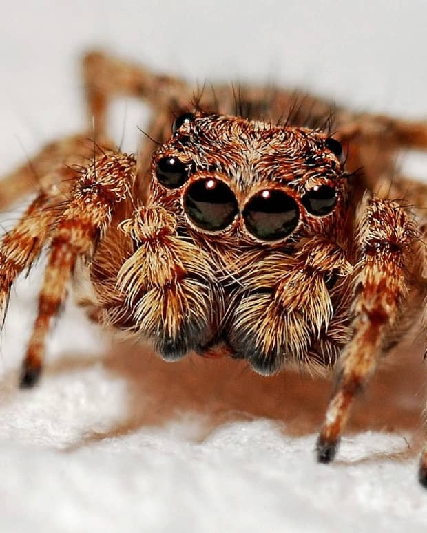 10-self-help-tips-to-eliminate-fear-of-harmless-spiders