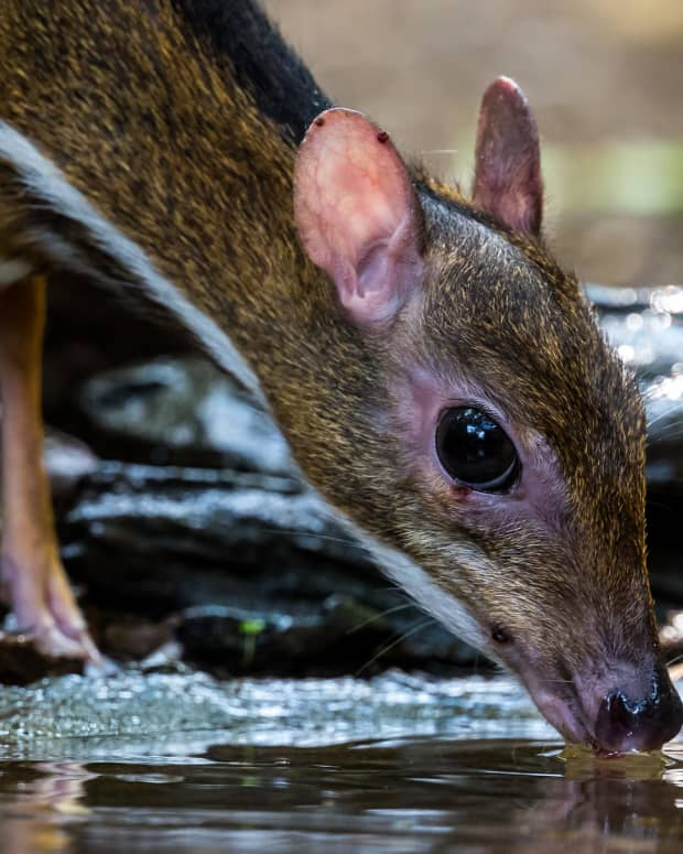 bedtime-story-story-of-mouse-deer-and-farmer