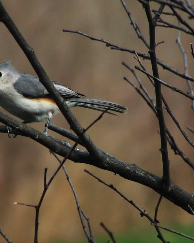 backyard-birding-dos-donts