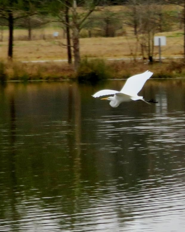 keith-wiess-park-natural-beauty-in-northeast-houston