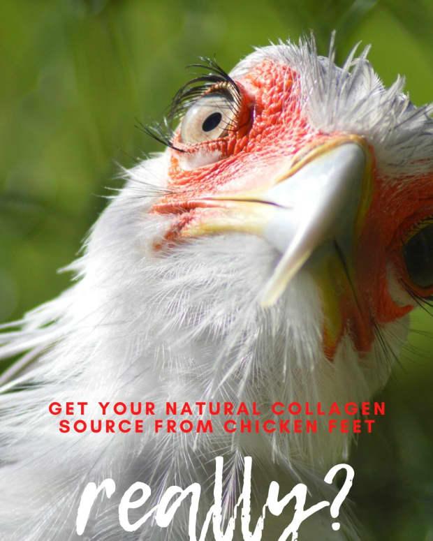 collagen-from-chicken-feet
