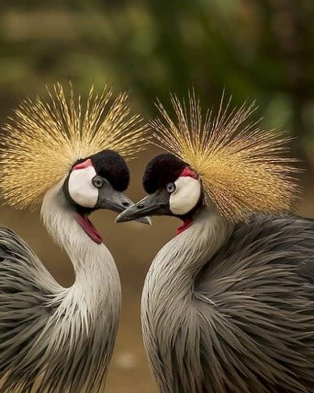 amazing-birds-in-the-world
