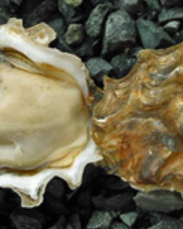 smoked-oysters-recipe