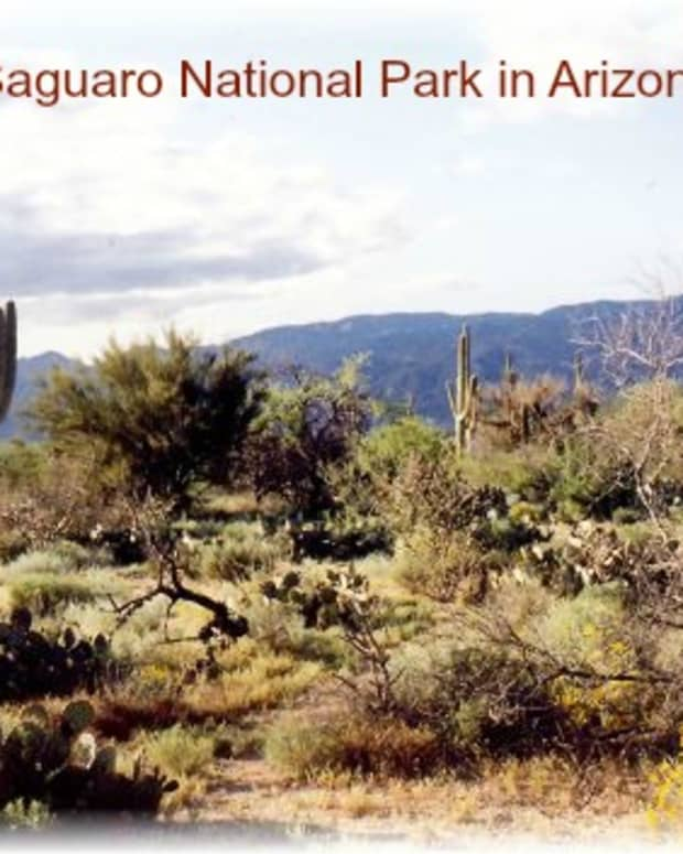 life-and-survival-in-the-saguaro-national-park