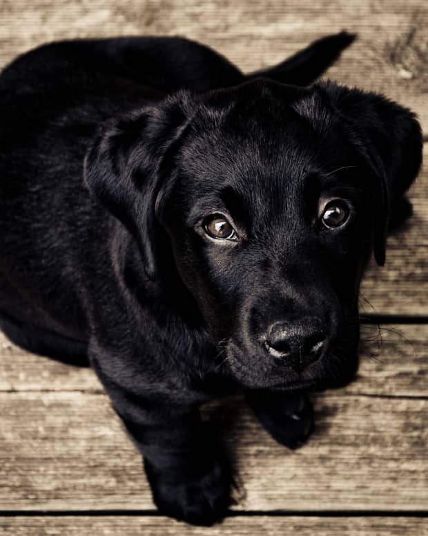 an-overview-of-dogs-diarrhea-and-home-remedies