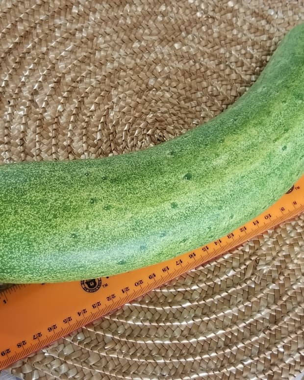 grow-a-healthy-crop-of-cucumbers
