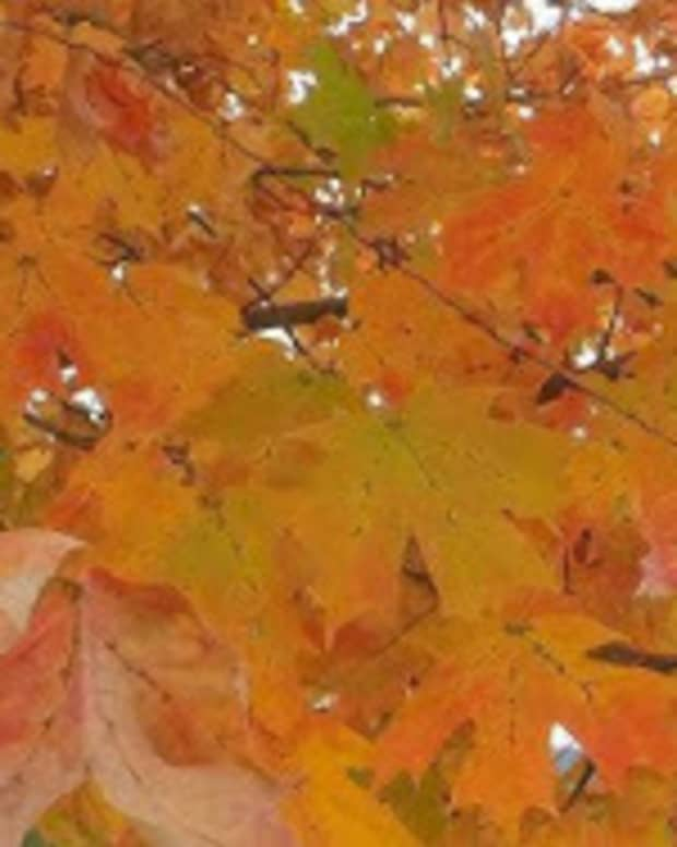 autumn-colors-spreading-across-america