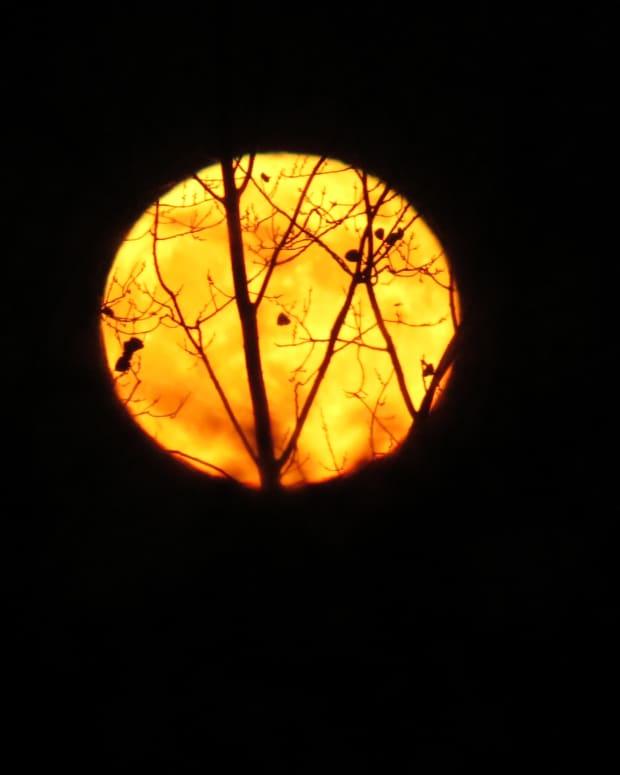 halloweens-indigo-moon