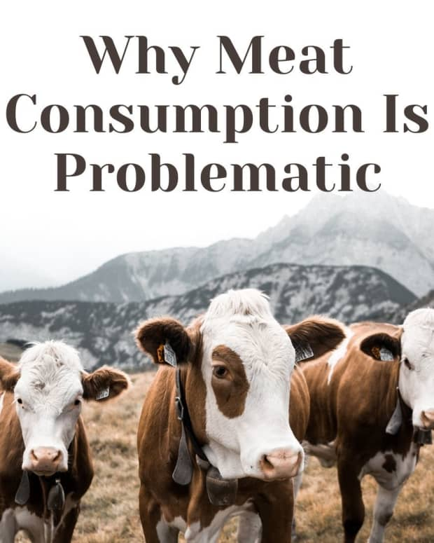 is-eating-meat-obsolete
