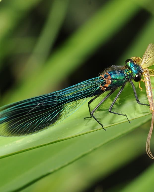 picture-these-different-images-of-butterflies-and-dragonflies