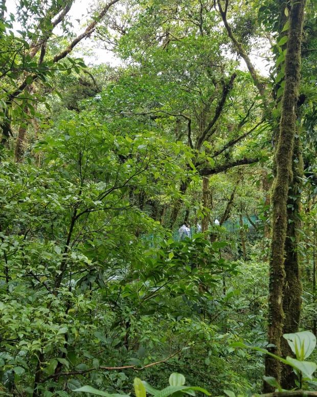 costa-rica-adventure-exploring-monteverde-the-cloud-forest