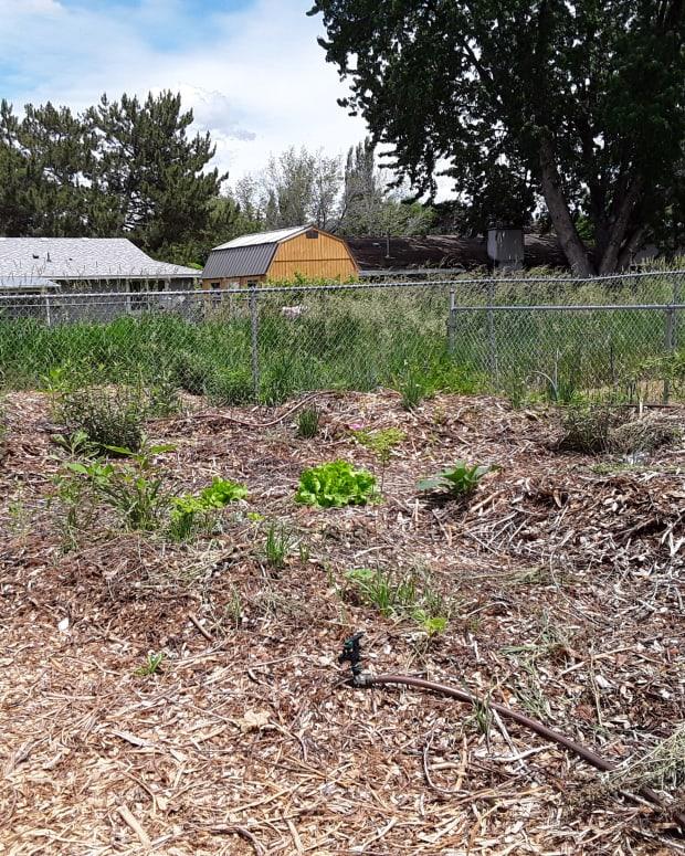 permaculture-pitfalls