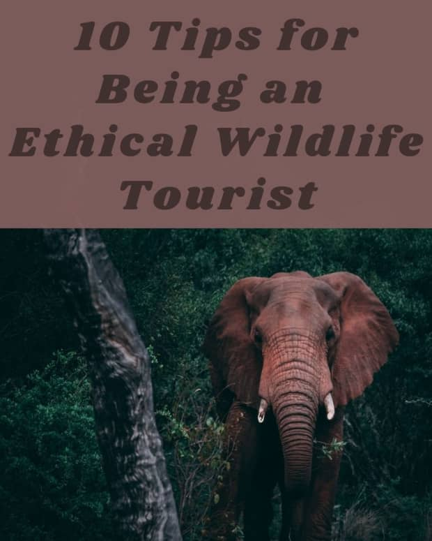 how-to-be-an-ethical-wildlife-tourist