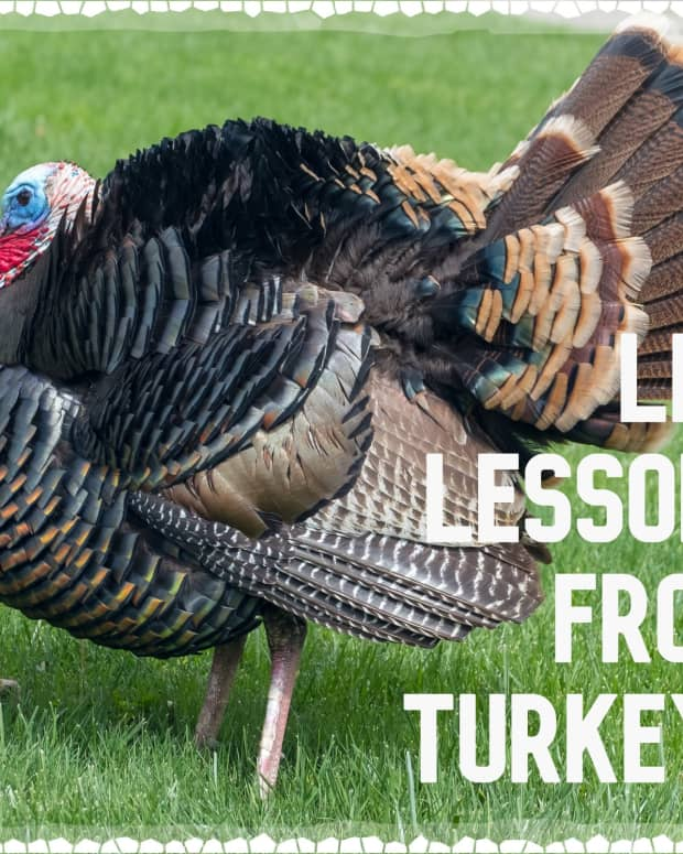 lessons-learned-from-turkeys-how-to-live-your-best-life