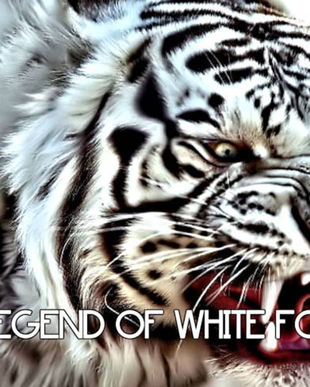 the-legend-of-white-forest