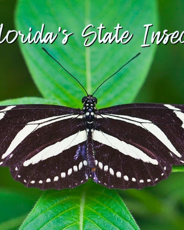 state-insect-of-florida