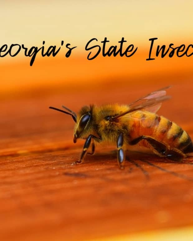 state-insect-of-georgia
