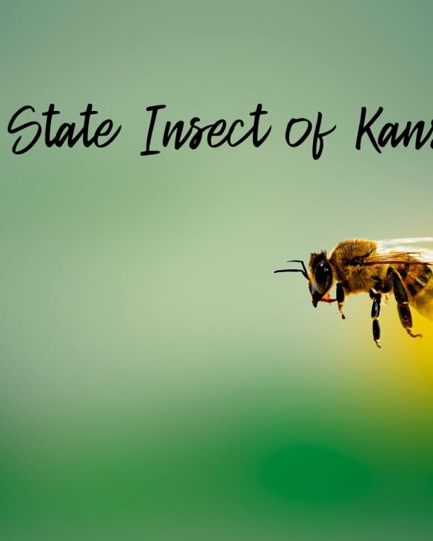 """state-insect-of-kansas"""">                 </picture>                 <div class="""
