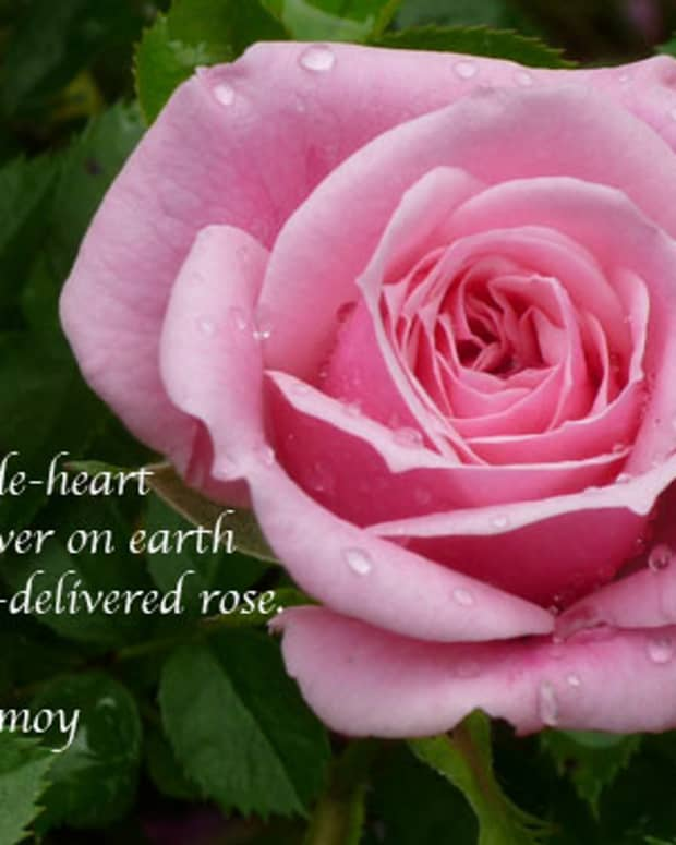 more-poetry-and-aphorisms-of-sri-chinmoy-saturdays-inspiration-33