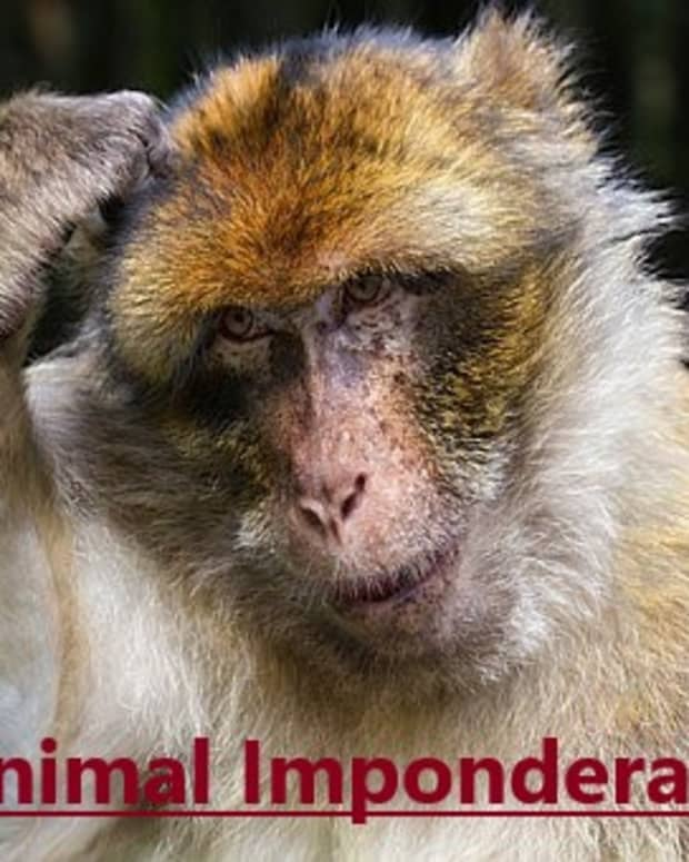 funny-imponderables-about-animals