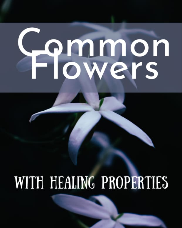 7-common-flowers-with-health-benefits