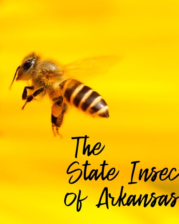 """state-insect-of-arkansas"""">                 </picture>                 <div class="""