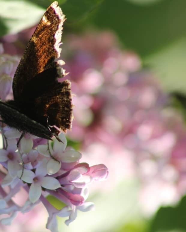 short-story-butterflies
