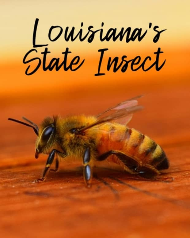 state-insect-of-louisiana