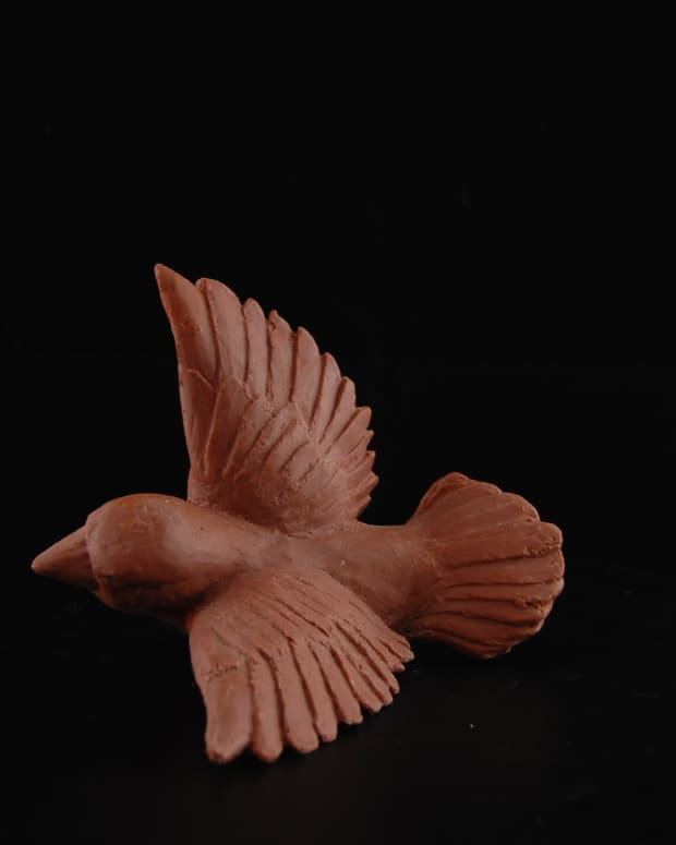 the-soil-bird