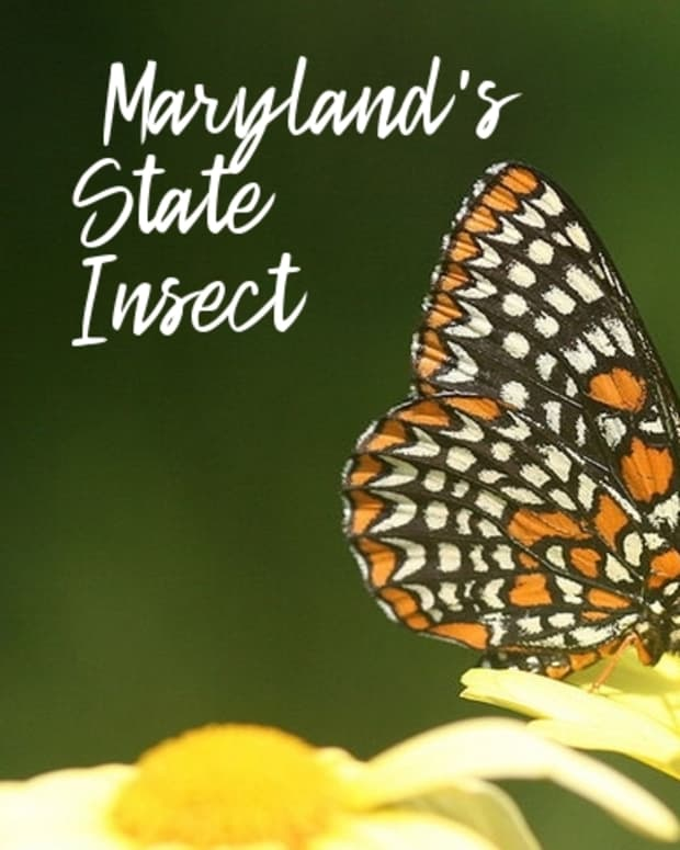 state-insect-of-maryland