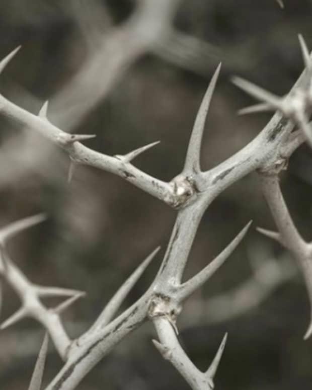 anxietys-thorny-presence