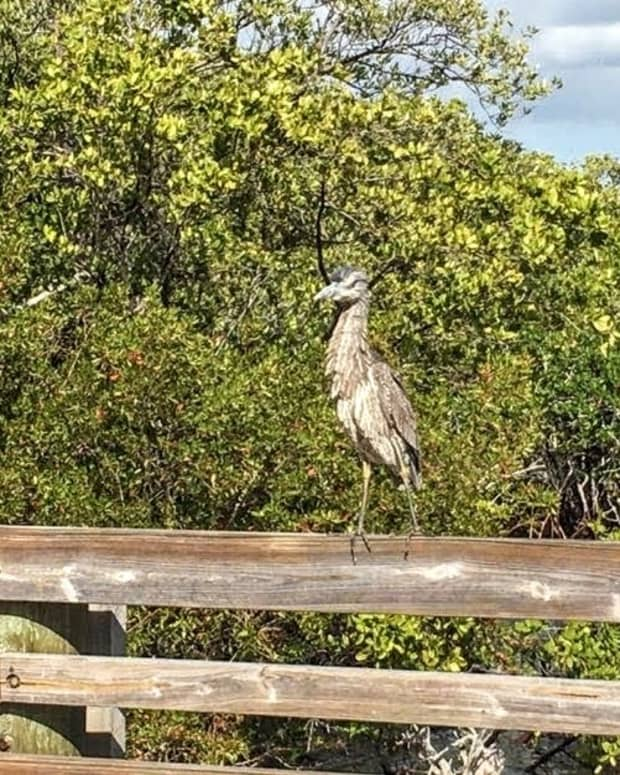 mangroves-of-florida