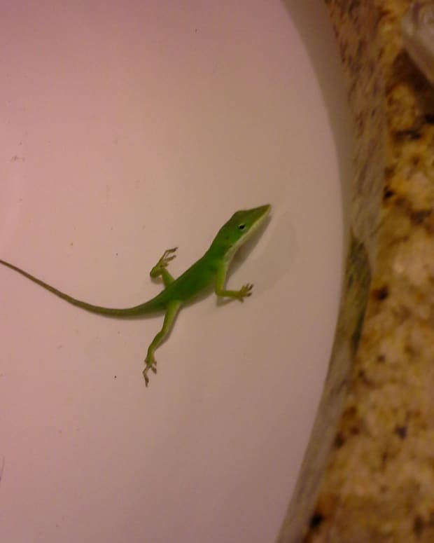 all-the-lovely-creatures-chapter-five-geckos-the-last-straw-and-hospice-jack