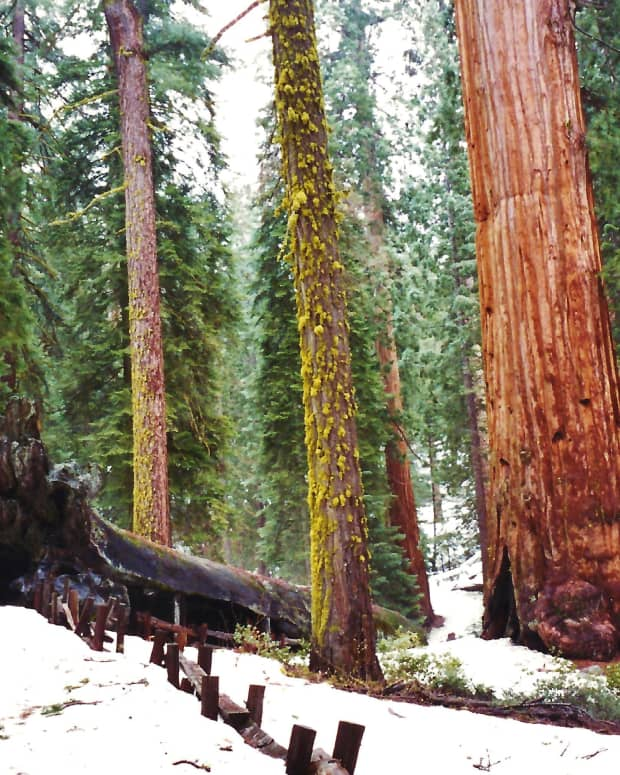 sequoia-and-kings-canyon-national-parks-general-sherman-tree-and-more