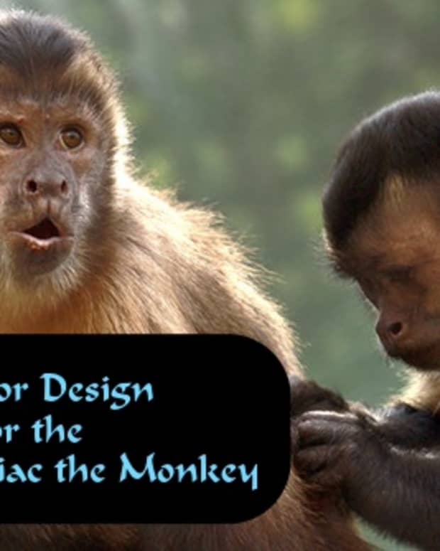 how-to-decorate-every-room-in-your-home-like-the-chinese-zodiac-the-monkey